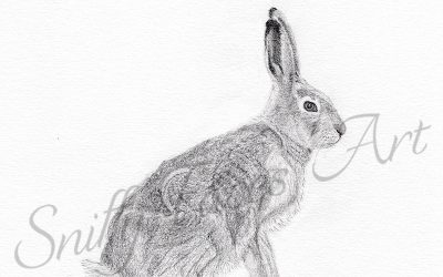 Natural History Illustration 101: Drawing a hare
