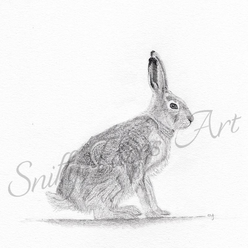 Graphite Hare