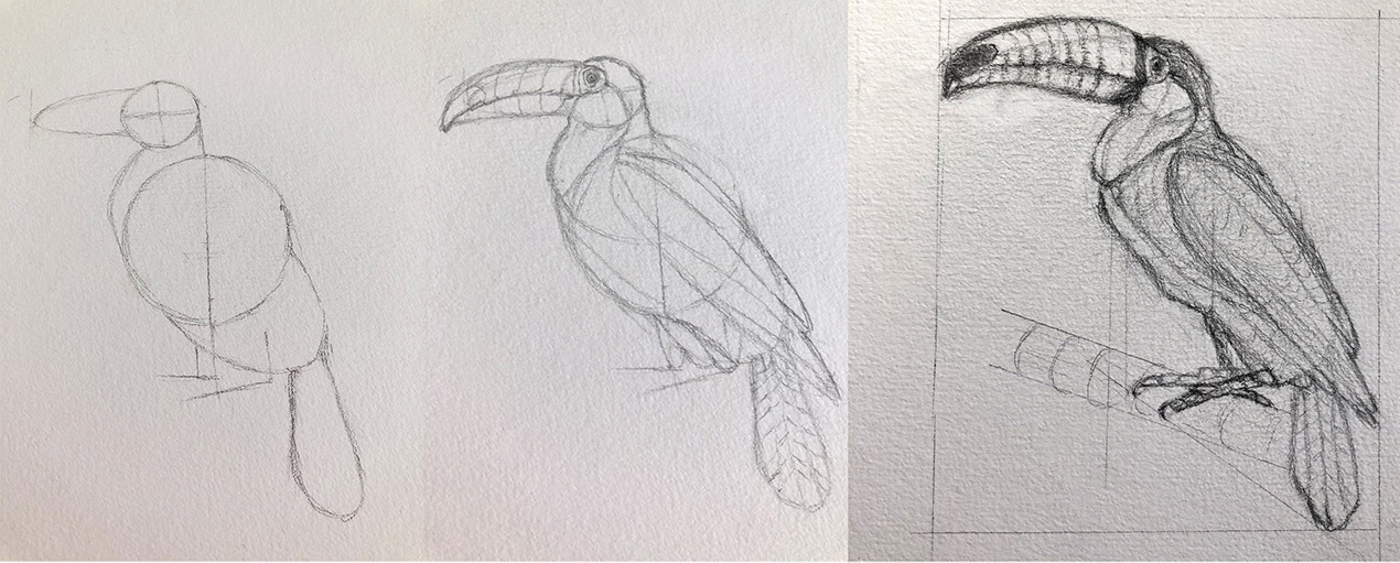 Natural History Illustration 101: Drawing Animals Sniffy Faces Art