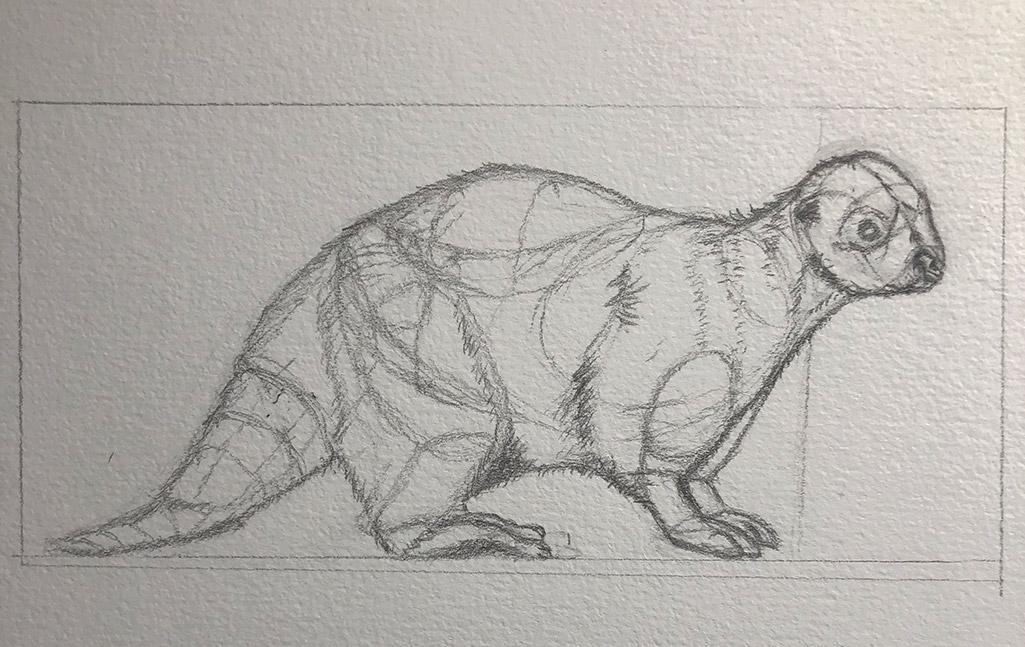 Natural History Illustration 101: Drawing Animals